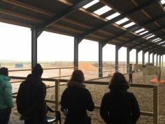 Horseless workshops 2019