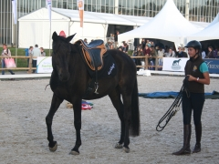 Demo - Horse Event 2018