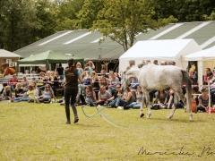 Demo Lisse, 2015 - photos by Marieke Bos